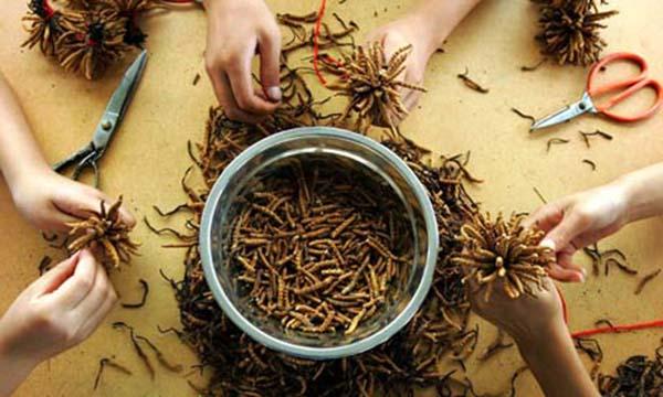 Cách dùng đông trùng hạ thảo nấu hải sản