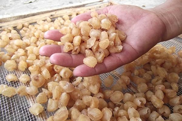 Nguyên liệu lon nhãn  hầm hạt sen đông trùng hạ thảo