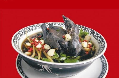 Món bồ câu hầm đông trùng hạ thảo nguyên con tươi