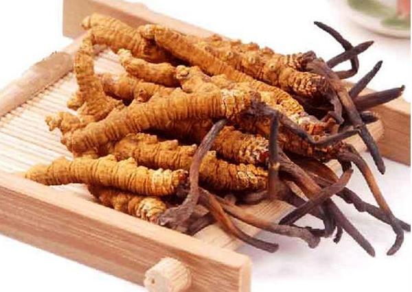 Cách chế biến đông trùng hạ thảo tổ yến Hima