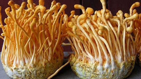 Cách bảo quản đông trùng hạ thảo