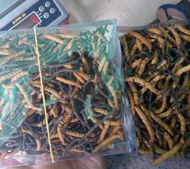 Bảo quản đông trùng hạ thảo