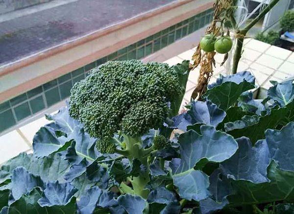 Bông cải xanh là thần dược chống ung thư